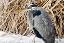 Utah Birds / by Nicole Swenson