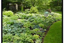 Hostas / by Growing The Home Garden
