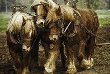 Animals-Horses-Draft #2 / by Ellary Branden
