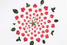 flowers / by Brandon / Kitchen Konfidence