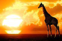 Animal Kingdom  / by Bruno Sotto