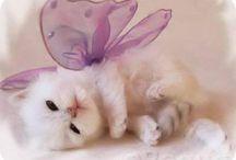 purrfect Kitties / by Susan Schmarkey