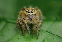 Eek! The insect world / by Mavis Sullivan