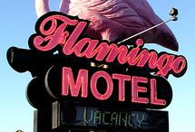 Flamingo / by Kj Froggy