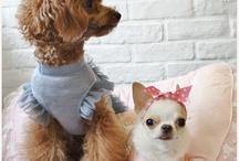 Chihuahuas <3  / by Ryleigh Pumphrey