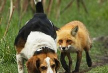 Hunting Dogs / by Hunter Ed