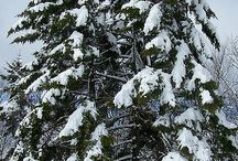 SNOW / by lillian mcfarland