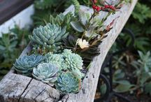 Green Thumb* / by Melissa Moss