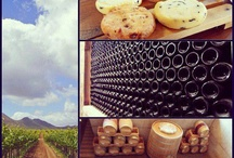 Wine Season in baja California Sur / by Visit Baja California Sur