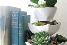 Plant-tastic Wonderfuls / by Tamarinis