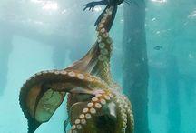Deep sea creatures / by Linda Bailey
