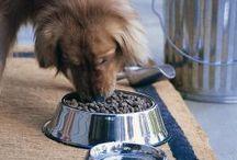 Pups / by Sarah Chrystyn