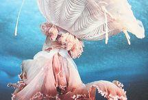 Fauna / by Leah Carlson