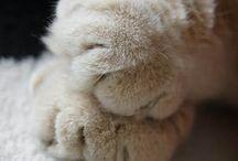 Fur Friends / by Peta Breen