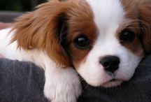 Pets pets pets / by Hannah Barrick