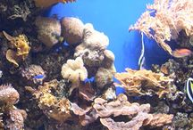 Ocean Studies / Ideas for a unit study oriented class about the ocean / by Heart for Homeschooling