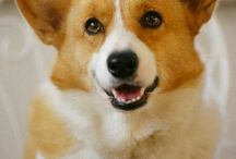Puppy love / by Jodi Parmley