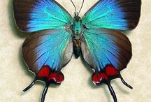 Butterflies & Amazing Insects / The enchanting insect world.  I Love having those beautiful  green beetles proliferate this board, because I love the shimmer of their color. / by Barbara Murphy