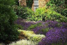 beautiful gardens  / gardening / by Irene Cadenhead