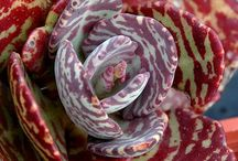 Succulents / by Kelly Spann