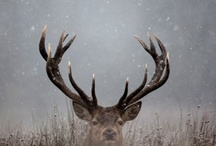 hunting / by Jennie Rogers