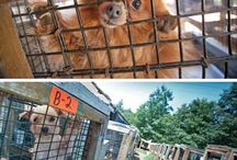 puppy mills must be stopped / by Kimberly Peterson