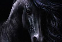 Horse / by Gisela Sedlmayer