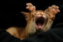 Kirdy Cuteness! / by MCAS Pets