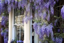Wisteria Lane / by Claire Miles