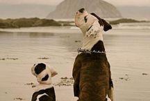 I love animals / by Lilianna Laouri