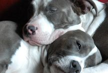Beautiful creatures / Dogs, cats, birds, butterflies...anything beautiful and adorable! / by Kimberly Myer