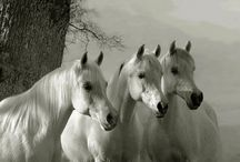 Homesteading - Can't be without a Horse / by Sandy Sibert