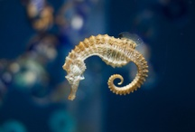 Seahorses / by Red Persimmon Imports - Katrina Ulrich