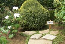 Mini garden ideas / for current house or future house / by San Smith