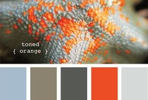 Color Combo / by Dawn Tavela
