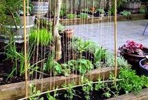 Gardening / by Lisa Coady-Birt