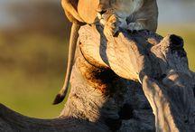 { ^..^ ♥♥ Wildlife ^..^ ♥♥ } / by Judy Haws-Guite