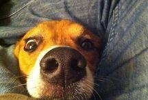 Dog gone funny / by Cassandra Myers