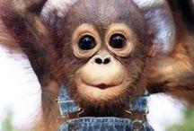 ANIMALS / by Sandra Glenn