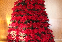 Christmas and the Holidays / Crafts, decor, food / by Niona Turney