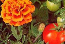 Garden Secrets / by Backyard Gardener