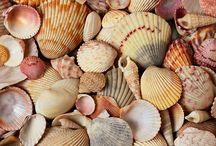 I love seashells / by Carol Jesmer