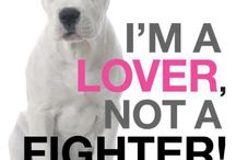 For The Love of a Pitbull / by Sarah Woods
