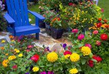 Gardening / by Shellie L.