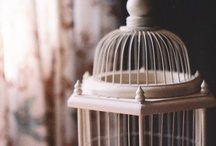 birdcages / by Tove Andersen