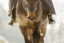 Equestrian - photography / Just some inspiration for pics of my own horses / by Therese Jönsson