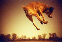 DOGS / by Kim Jenkins