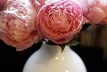 Flowers / by Stephanie Goff