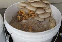 Shroomery / All about the fungi / by YourHomeBirth