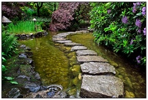 Stepping Stones and foot paths / by Julie Futch